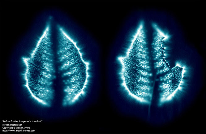 Kirlian Leaf